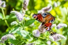 关闭在花-迷离花背景的蝴蝶 库存照片