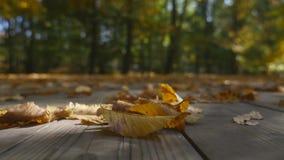 关闭在落的秋叶 库存照片