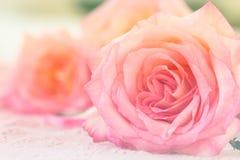 关闭在软的样式的一朵美丽的桃红色玫瑰 免版税库存图片
