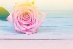 关闭在软的样式的一朵美丽的桃红色玫瑰 库存照片