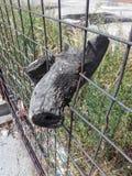 关闭在金属篱芭增长的树片断 库存照片