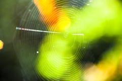 关闭在阳光点燃的树之间的蜘蛛网 有选择性的focu 库存图片