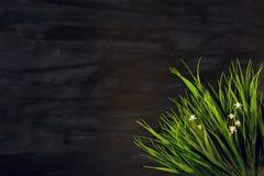 关闭在黑木或金属背景的绿草叶子 库存图片