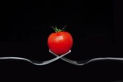 关闭在2把叉子的一个蕃茄 库存图片