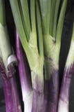 关闭在紫色、绿色和白色的葱茎 库存图片