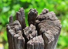 关闭在绿色领域的一个老树桩,选择聚焦 图库摄影