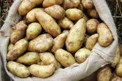 关闭在zack袋子的土豆 免版税库存照片