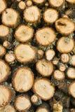 橡木木柴 库存照片