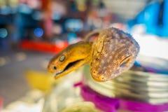 关闭壁虎头选择聚焦有后边一条被弄脏的蛇的,准备由在海岛上的本机在离海岸的附近  免版税库存照片