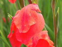 关闭大角度橙色花瓣看法充分的框架细节  库存照片