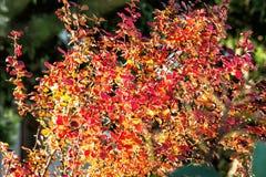 关闭季节性红色植物照片  库存照片