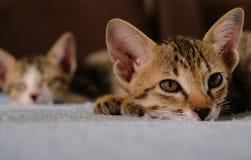 关闭小猫面孔睡眠和看在毛巾并且弄脏小猫和棕色沙发在背景、温暖,黑暗的口气和文本空间中 免版税库存图片