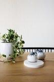 关闭常春藤盆栽植物和装饰品在一当代用餐 免版税库存图片
