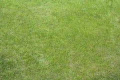 关闭干净的新春天豪华鲜绿色的草 背景、草坪、橄榄球和篮球调遣 免版税库存照片