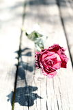 关闭干红色玫瑰射击在木头的 免版税图库摄影