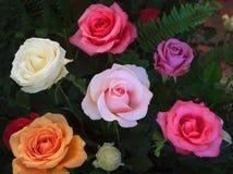 关闭开花的玫瑰花bouque的美好的品种颜色 免版税库存图片