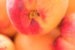 关闭成熟杏子 免版税库存照片