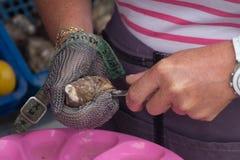 关闭打开牡蛎,康卡尔,法国的手 库存图片