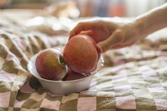 关闭拿着一块板材用新鲜的未加工的果子苹果的手在床上早晨f 库存照片