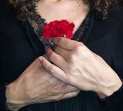 关闭拿着一支红色康乃馨的女性手反对她的che 库存照片