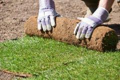 关闭放置新的草坪的造园家草皮 库存图片