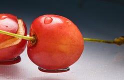 关闭新鲜的可口鲜美甜樱桃宏指令与水蠕虫叮咬滴和踪影的在灰色梯度背景的与 免版税库存图片
