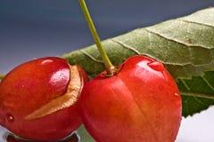 关闭新鲜的可口鲜美甜樱桃宏指令与水蠕虫叮咬滴和踪影的在灰色梯度背景的 图库摄影