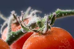 关闭新鲜的湿蕃茄 免版税库存照片