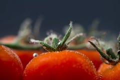 关闭新鲜的湿蕃茄 免版税库存图片