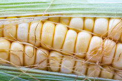 关闭新鲜的甜玉米 免版税库存照片