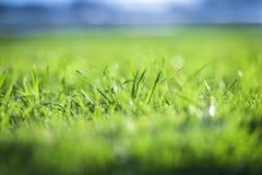 关闭新鲜的绿草 库存图片