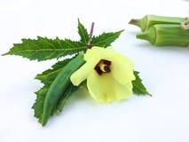 关闭新鲜秋葵果子Abelmoschus esculentus在绿色叶子并且切在白色背景 库存照片