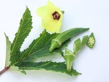 关闭新鲜Abelmoschus esculentus在绿色叶子并且切在白色背景 免版税库存照片