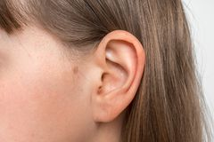 关闭有女性耳朵的人头 库存图片