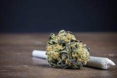关闭有杂草的优质有力大麻芽 免版税库存照片