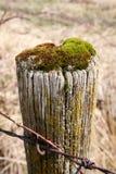 关闭有绿色青苔的一个老篱芭岗位 免版税图库摄影