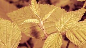 关闭有茎的A未打开的植物叶子 免版税库存照片
