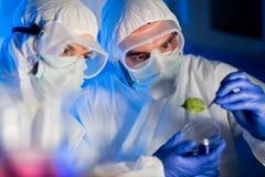 关闭有绿色叶子的科学家在实验室 免版税库存图片