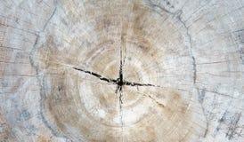 关闭木树桩摘要纹理backgroun的被削减的部分 库存图片