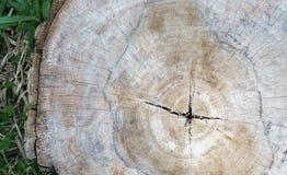 关闭木树桩摘要纹理backgroun的被削减的部分 免版税图库摄影