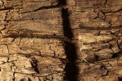 关闭木纹理 免版税图库摄影