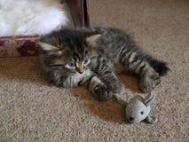 关闭杰西使用与玩具老鼠的小猫 免版税库存照片