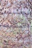 关闭构造了树背景的树干 免版税图库摄影