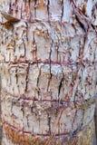 关闭构造了树背景的树干 库存照片