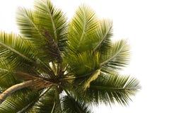 关闭查出的棕榈树  免版税库存图片