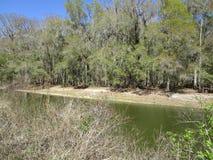 关闭树和水路 免版税库存照片