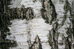 关闭树皮细节-背景或构造 免版税库存照片