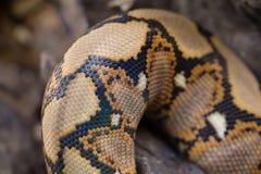关闭样式蟒蛇被构造的蛇皮摘要 库存图片