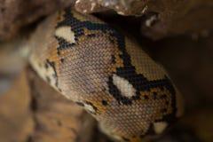 关闭样式蟒蛇被构造的蛇皮摘要 库存照片