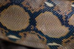 关闭样式蟒蛇被构造的蛇皮摘要 免版税图库摄影